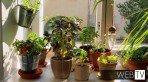 Decoração mostra porta-temperos para embelezar a cozinha e horta de apartamento