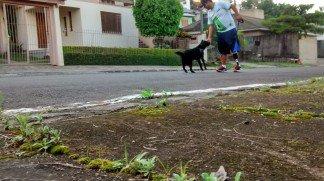 Aminalescas: passeio e brincadeira com animais de estimação