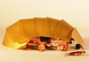 Barata robótica criada por cientistas de Berkeley, que busca reproduzir capacidade dos insetos de entrar em aberturas pequenas