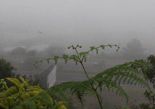 Neblina tomou conta da paisagem do Vale do Sinos nesta manh�