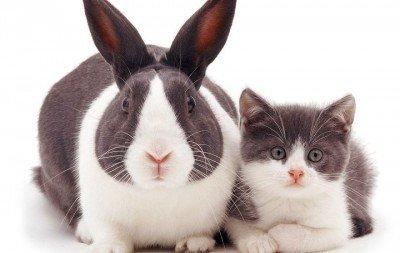 Ag�ncia clicou animais parecidos, mas de esp�cies diferentes.