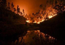 Moradores morreram carbonizados ao tentar fugir de incêndio florestal