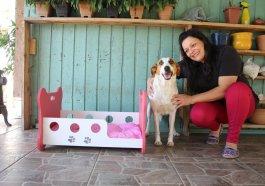 Amigo bicho: empresária do Parque da Matriz cria cama em MDF para bichinhos de estimação