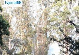Boletim NH: calorão de quase 40ºC pode provocar focos de incêndio hoje